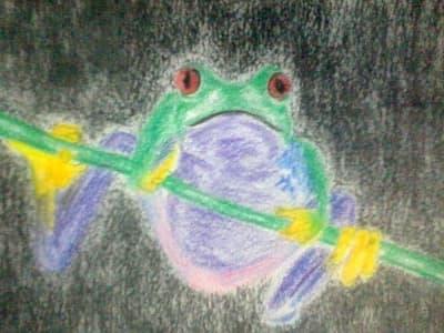 frogfb
