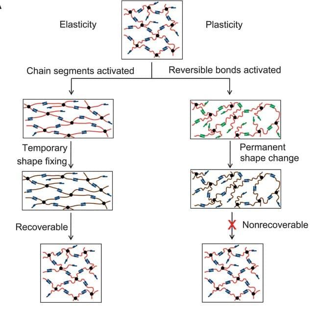 shape-shifting-polymer-plasticity-elasticity