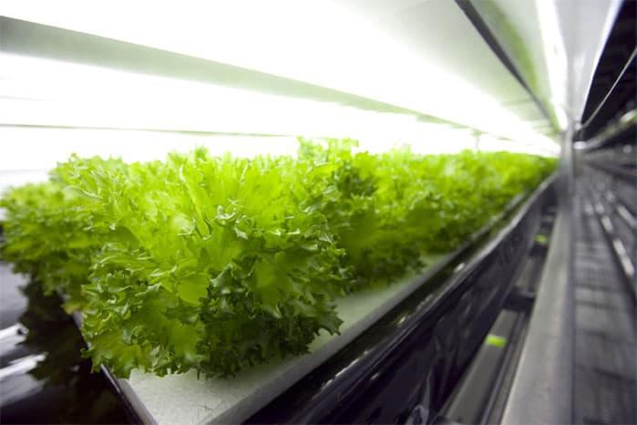 spread-robot-farm-cultivates-lettuce-indoors