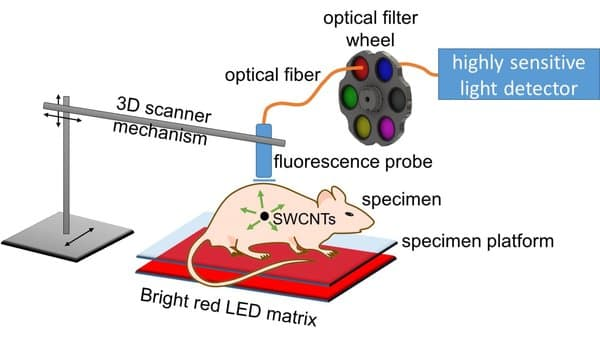 tumour_cell_detection_image_1