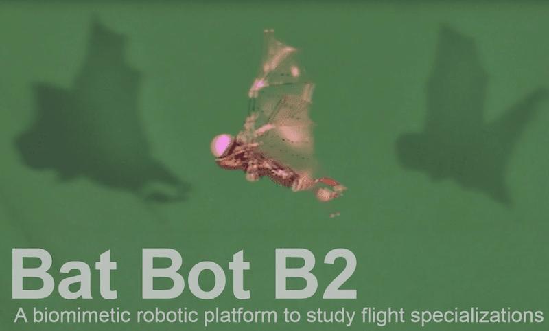 bat-bot-b2-caltech-1