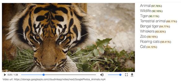 machine-learning-next-google-video-api