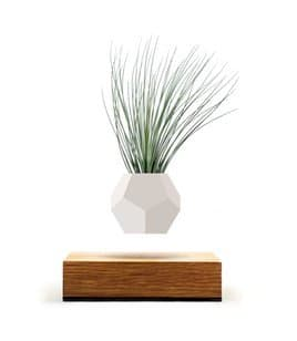 Levitating_plant