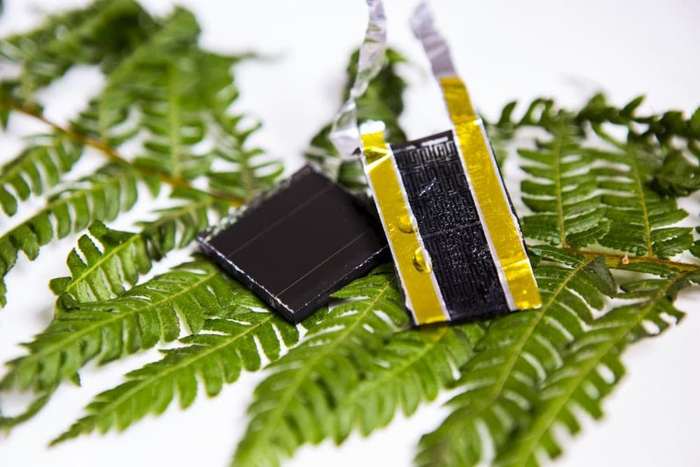 fern-leaf-inspired-graphene-electrode
