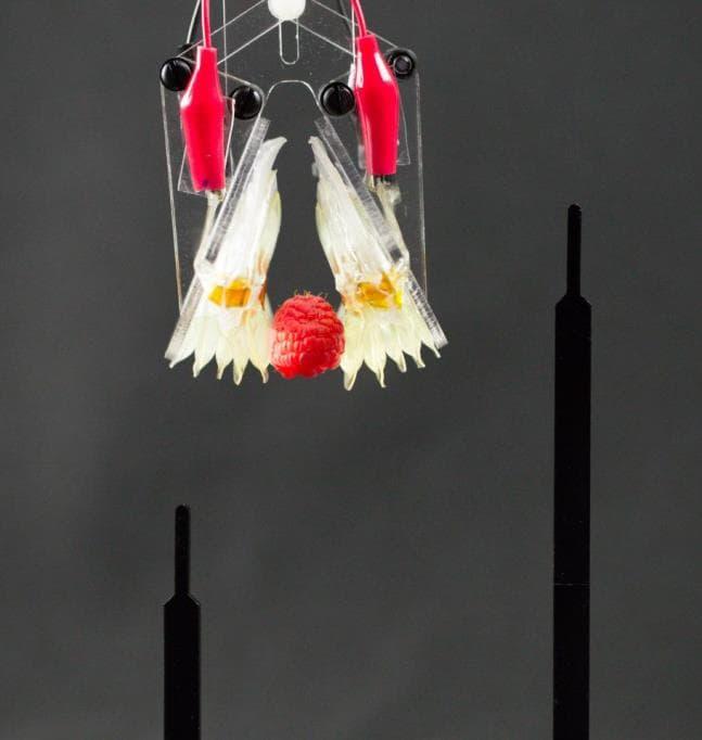 Robotic-actuators-lifting-raspberry