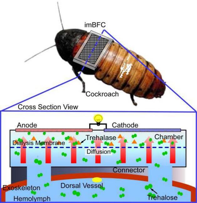cockroach-network